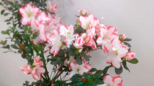 Imagem da galeria de fotos da Quero Flores Floricultura